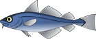 Fish of Australia - Australian Sea and Freshwater Fishes