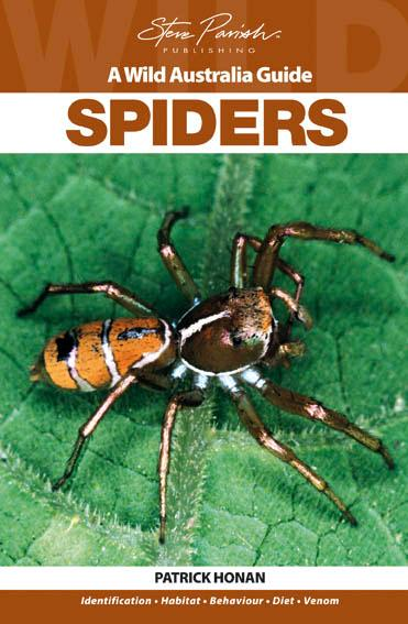 Spiders: A Wild Australia Guide, by Patrick Honan - Micropholcomma - Micropholcomma Sp.