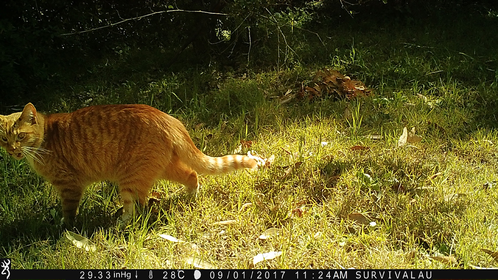 In the daytime, colour pictures can be taken - Using a Trail Camera to Practice Trapping and/or Study Animals