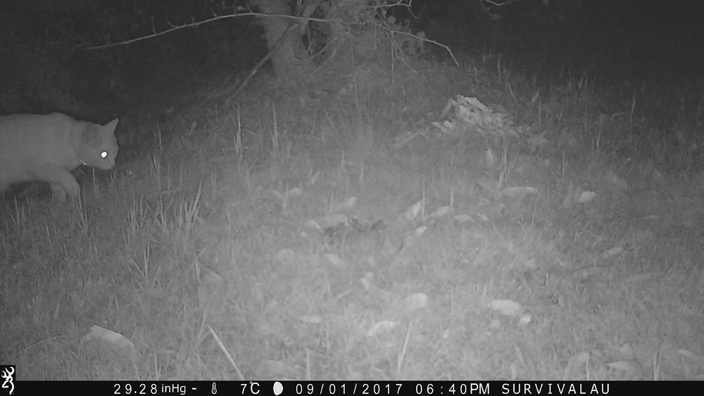Something is sneaking into view - Using a Trail Camera to Practice Trapping and/or Study Animals