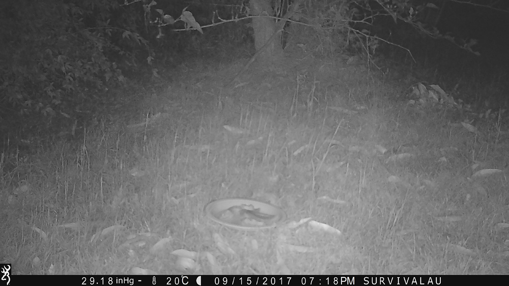 Waiting for an animal... What will come? - Using a Trail Camera to Practice Trapping and/or Study Animals