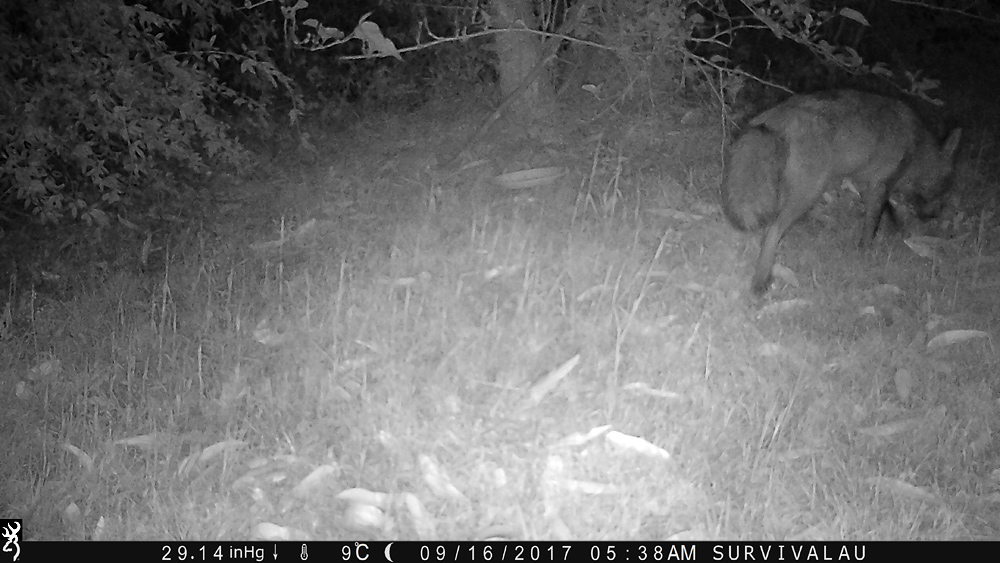Away it goes - Using a Trail Camera to Practice Trapping and/or Study Animals