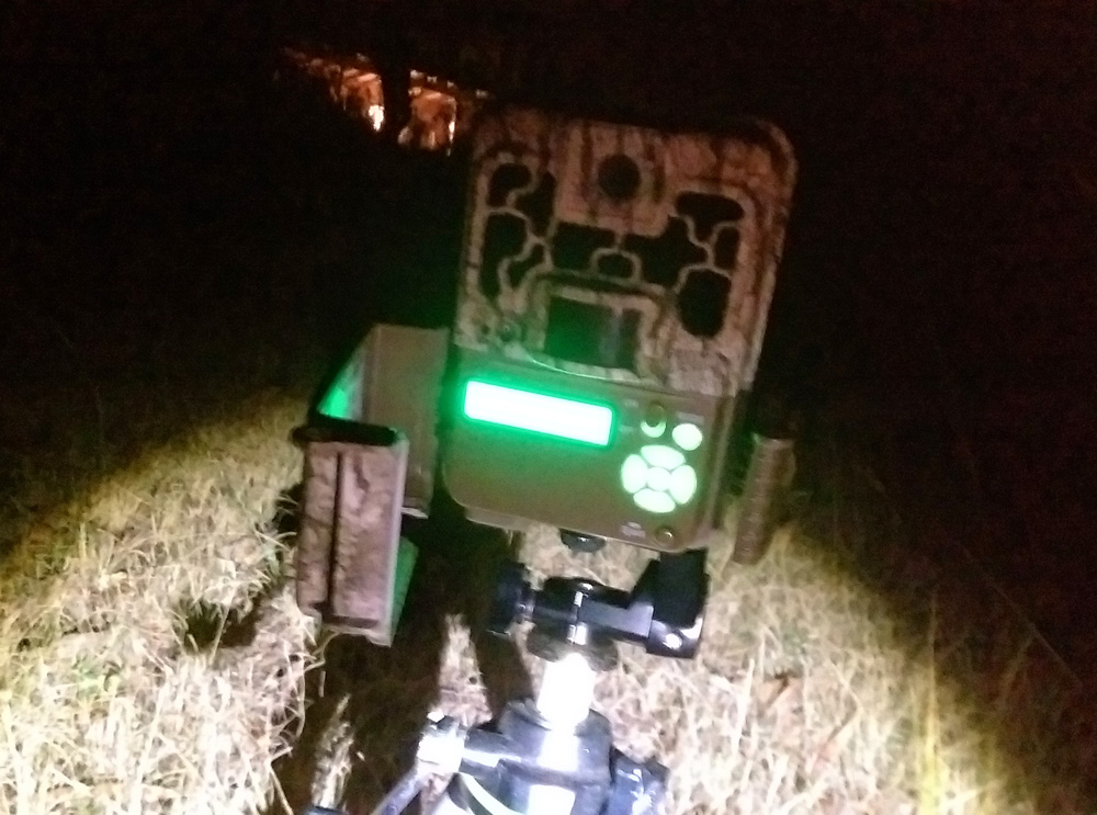 My Browning Spec Ops BTC-8FHD trail camera. The display is illuminated bright green - Using a Trail Camera to Practice Trapping and/or Study Animals