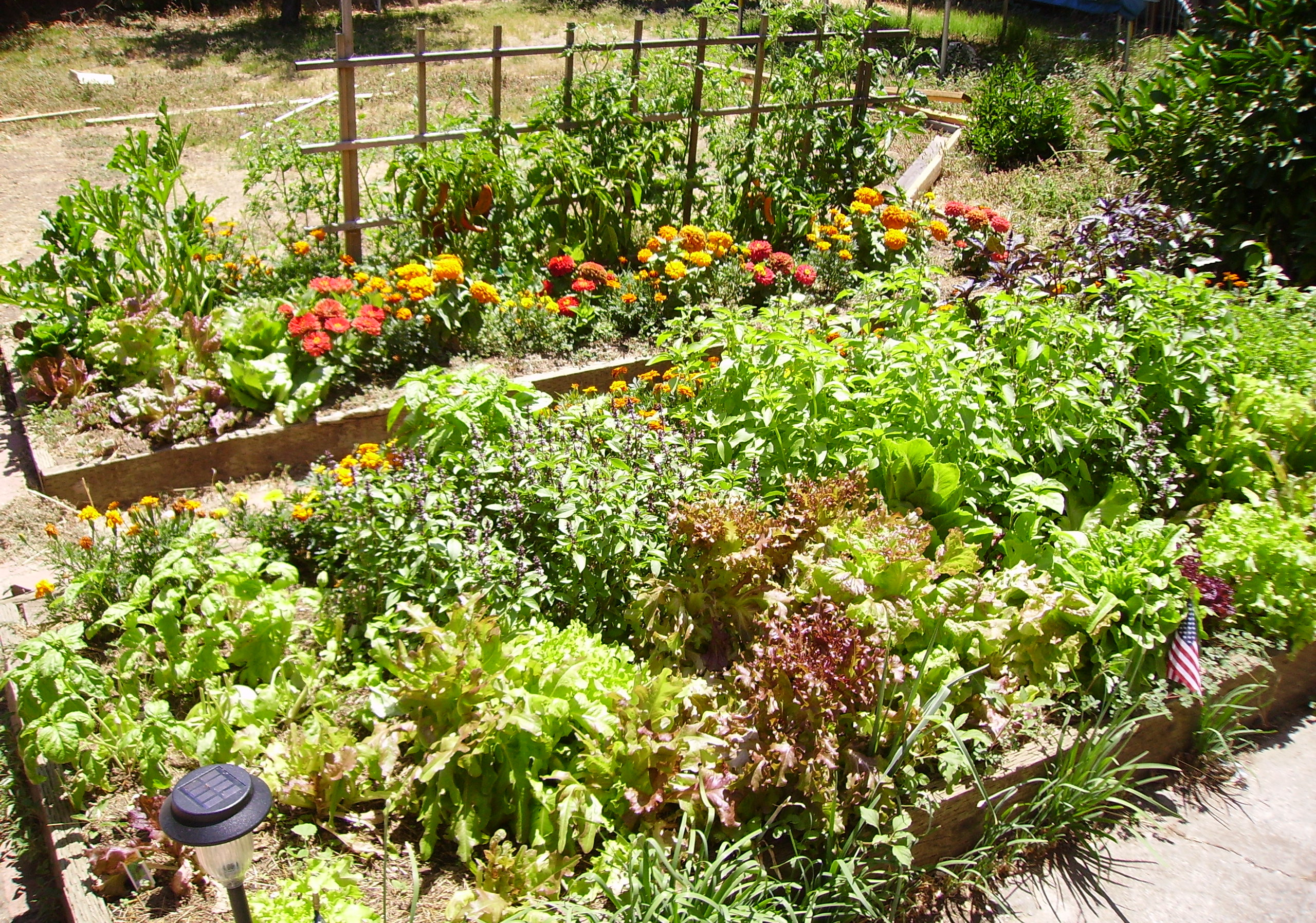 Creating a raised garden bed permaculture sustainable for Raised vegetable garden