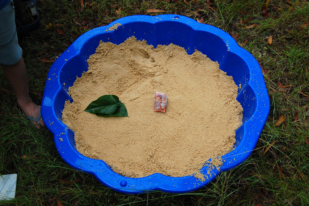 Sandpit tracking box with cheap pet-grade meat as bait - Make an Instant Tracking Box to Learn Animal Tracking - Survival.org.au