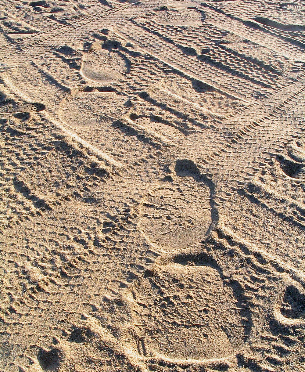 Animal Tracking Quiz, Question 6 - Can you identify this animal track?