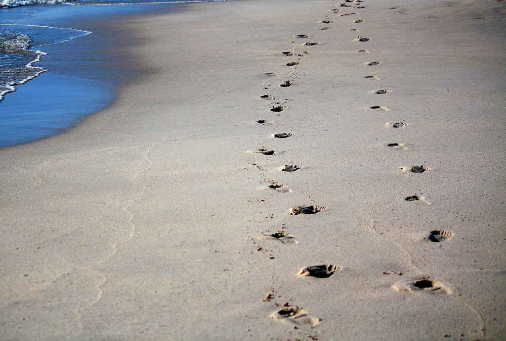 Animal Tracking Quiz, Question 9 - Can you identify this animal track?