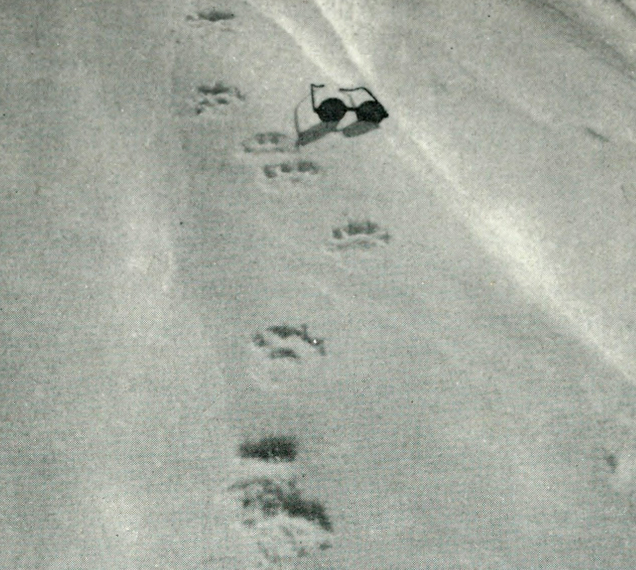 Animal Tracking Quiz, Question 1 - Can you identify this animal track?