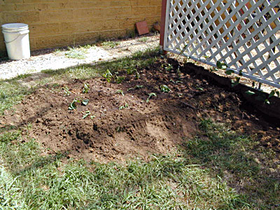 Starting a Vegie Garden - After Planting